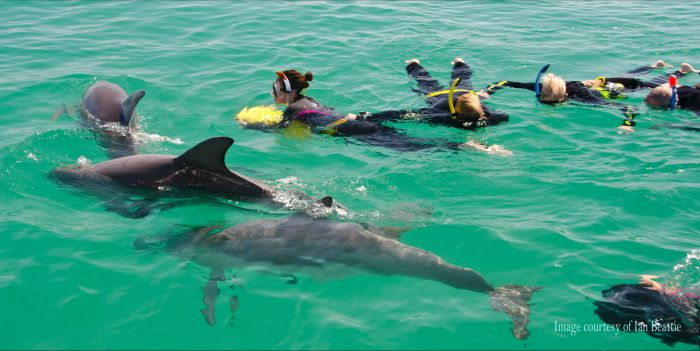 Rockingham Wild Encounters - Swim with Wild Dolphins - Tweed Heads Accommodation
