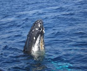 Jervis Bay Whales - Tweed Heads Accommodation