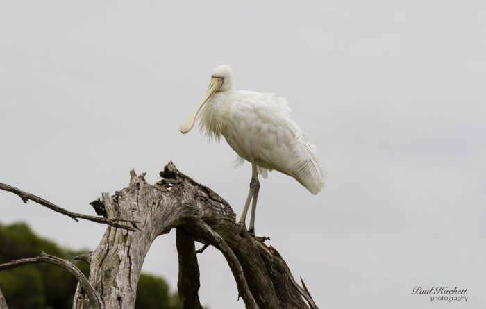 Melbourne Birding Tours - Tweed Heads Accommodation