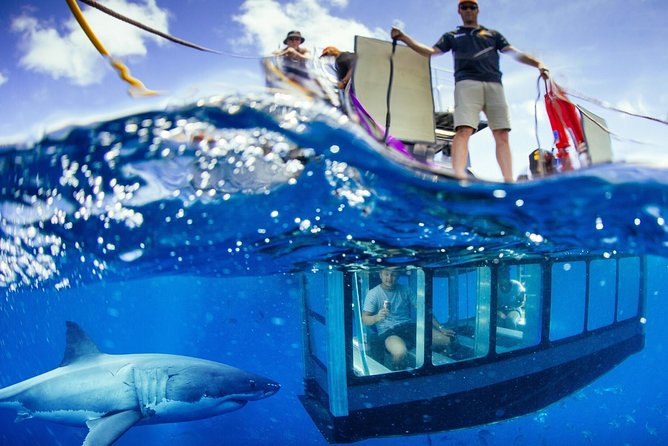 White Shark Tour with Optional Cage Dive from Port Lincoln - Tweed Heads Accommodation