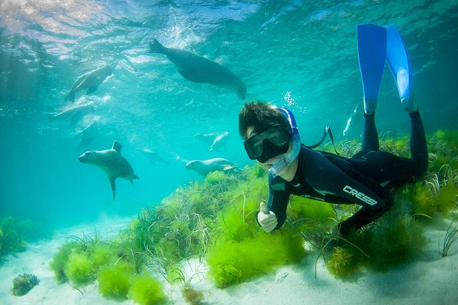 Half-Day Sea Lion Snorkeling Tour from Port Lincoln - Tweed Heads Accommodation