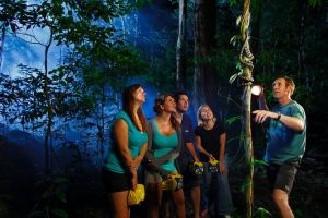 Daintree Rainforest Night Walk from Cape Tribulation - Tweed Heads Accommodation