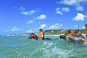 Horse Swimming Ride from Rainbow Beach - Tweed Heads Accommodation