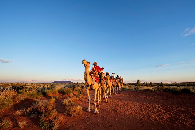 Uluru Camel Express Sunrise or Sunset Tours - Tweed Heads Accommodation