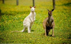 Bordertown Wildlife Park - Tweed Heads Accommodation