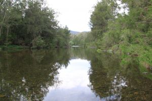 Riverside Campground and Picnic Area - Tweed Heads Accommodation