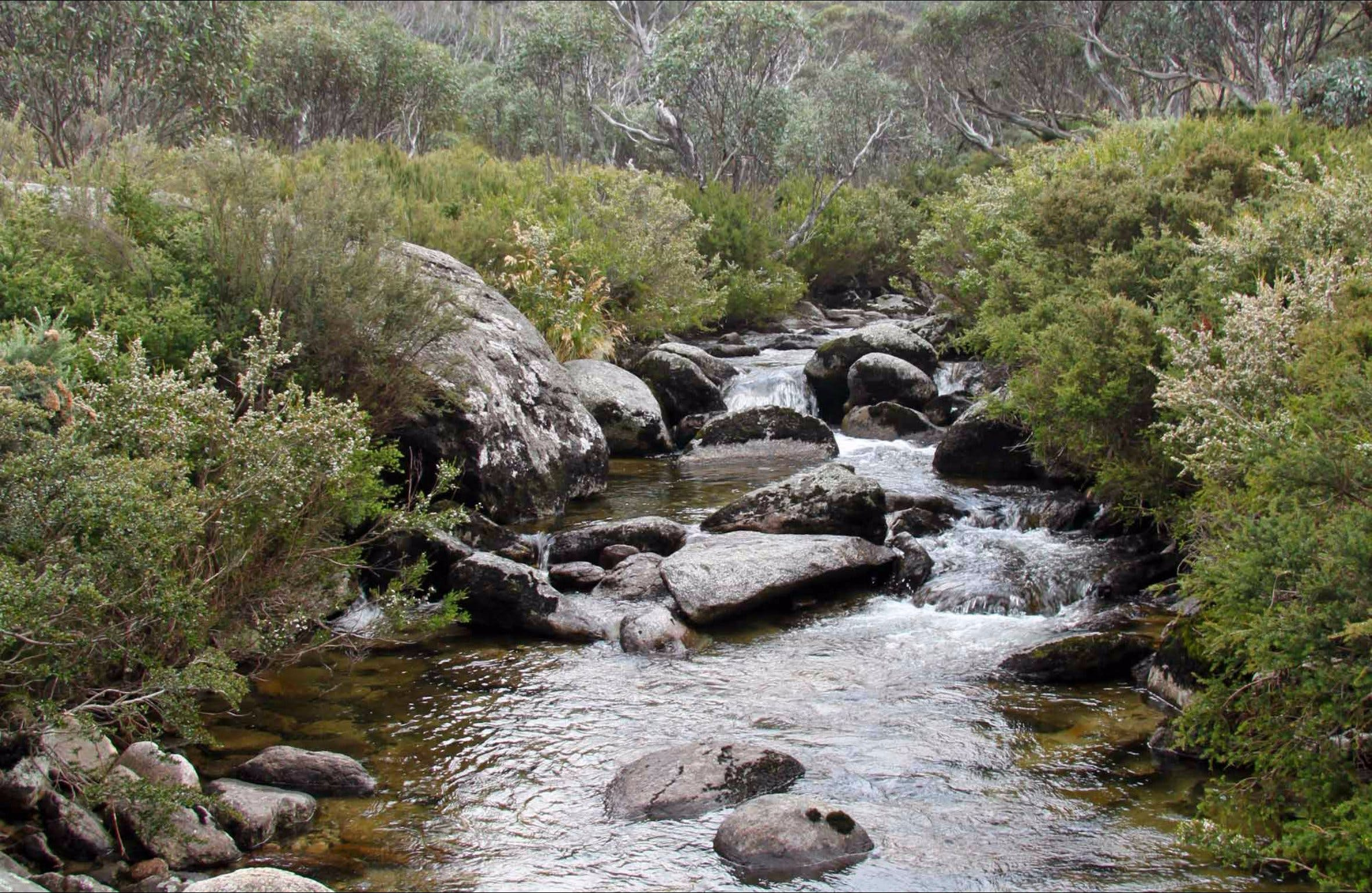 Thredbo River Track - Tweed Heads Accommodation