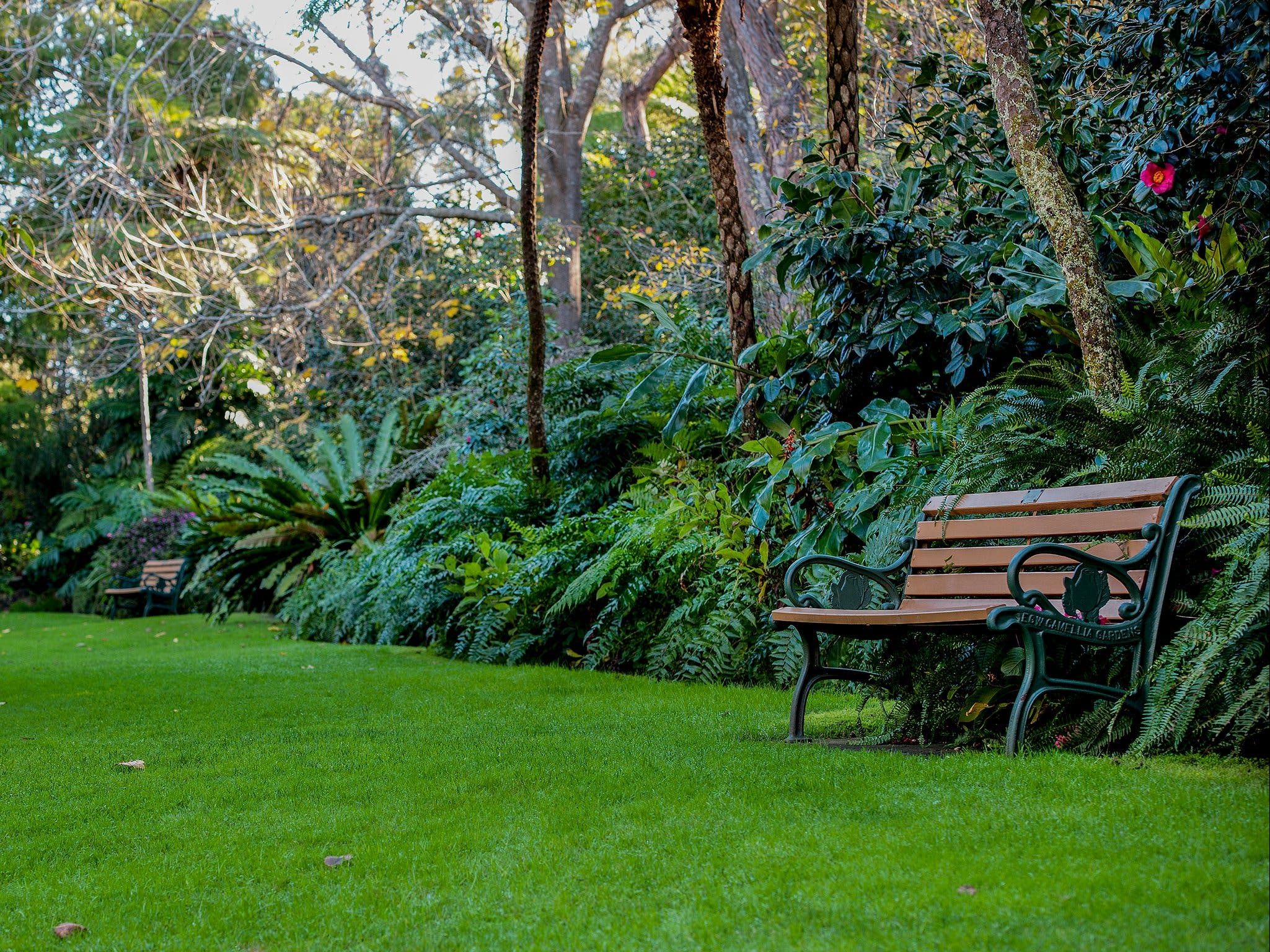 EG Waterhouse National Camellia Gardens - Tweed Heads Accommodation