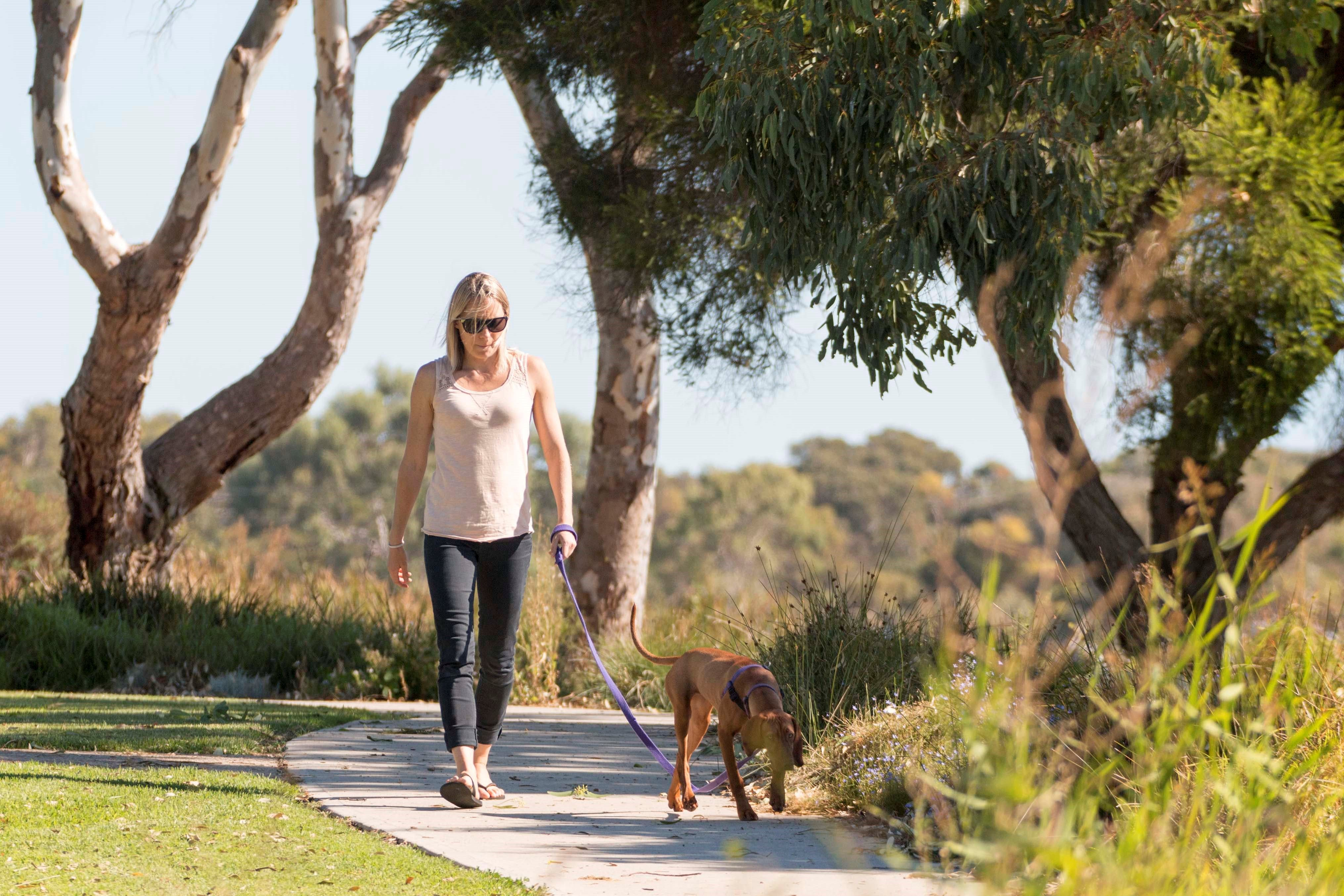 Meningie Walking and Cycling Trails - Tweed Heads Accommodation