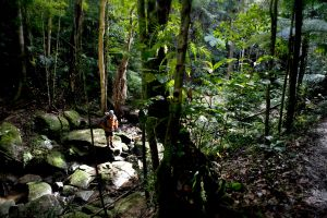 Strickland State Forest - Tweed Heads Accommodation