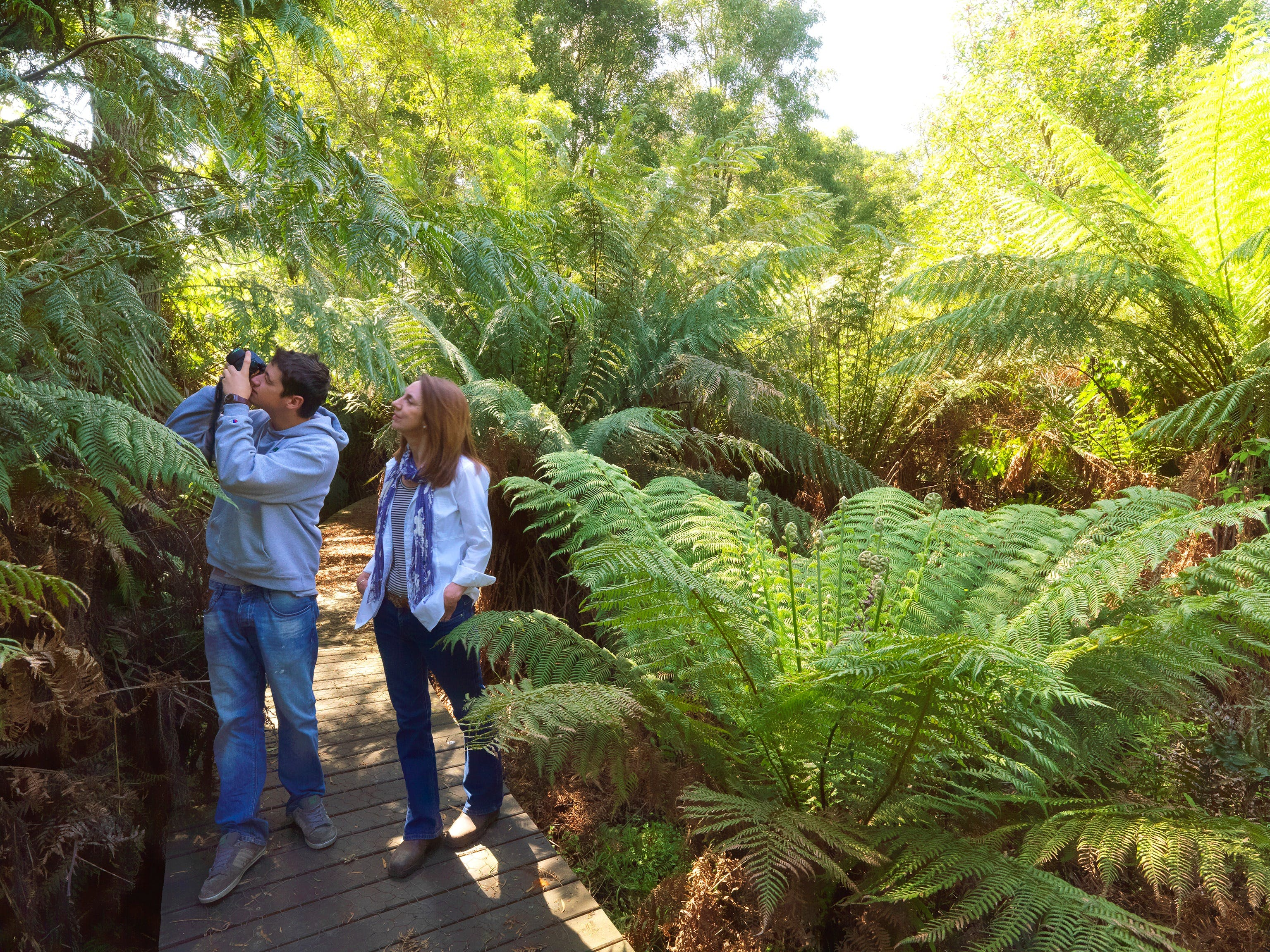 Endeavour Fern Gully Walks - Tweed Heads Accommodation