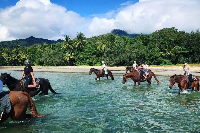 Afternoon Beach Horse Ride in Cape Tribulation - Tweed Heads Accommodation
