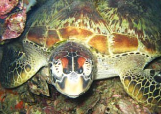 Adrenalin Snorkel and Dive - Tweed Heads Accommodation
