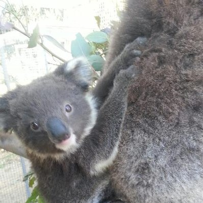 West Oz Wildlife Petting Zoos - Tweed Heads Accommodation