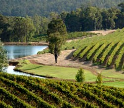 Brookhampton Estate Vineyard - Tweed Heads Accommodation