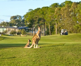 Sanctuary Cove Golf and Country Club - Tweed Heads Accommodation
