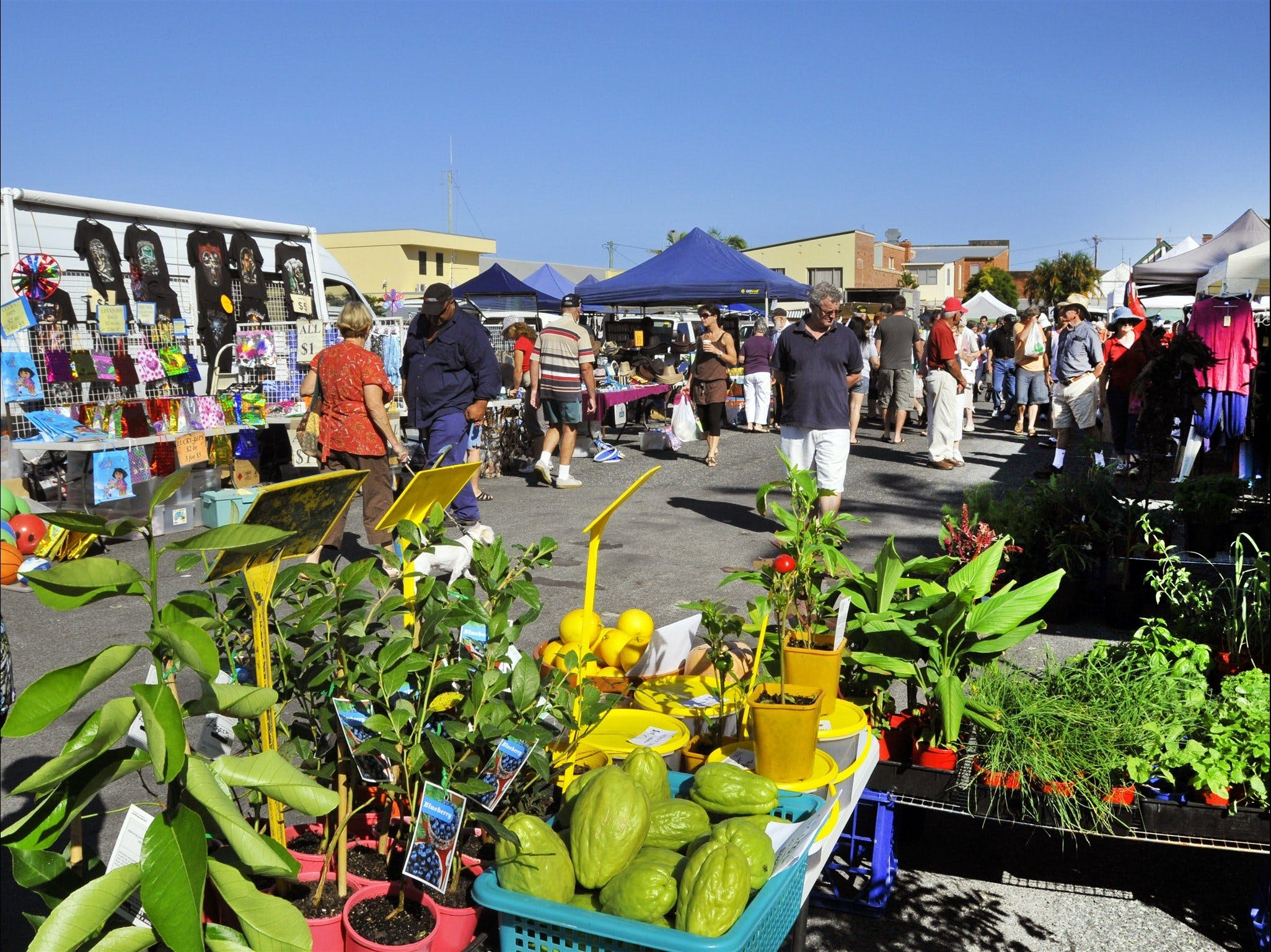 Maclean Community Monthly Markets - Tweed Heads Accommodation