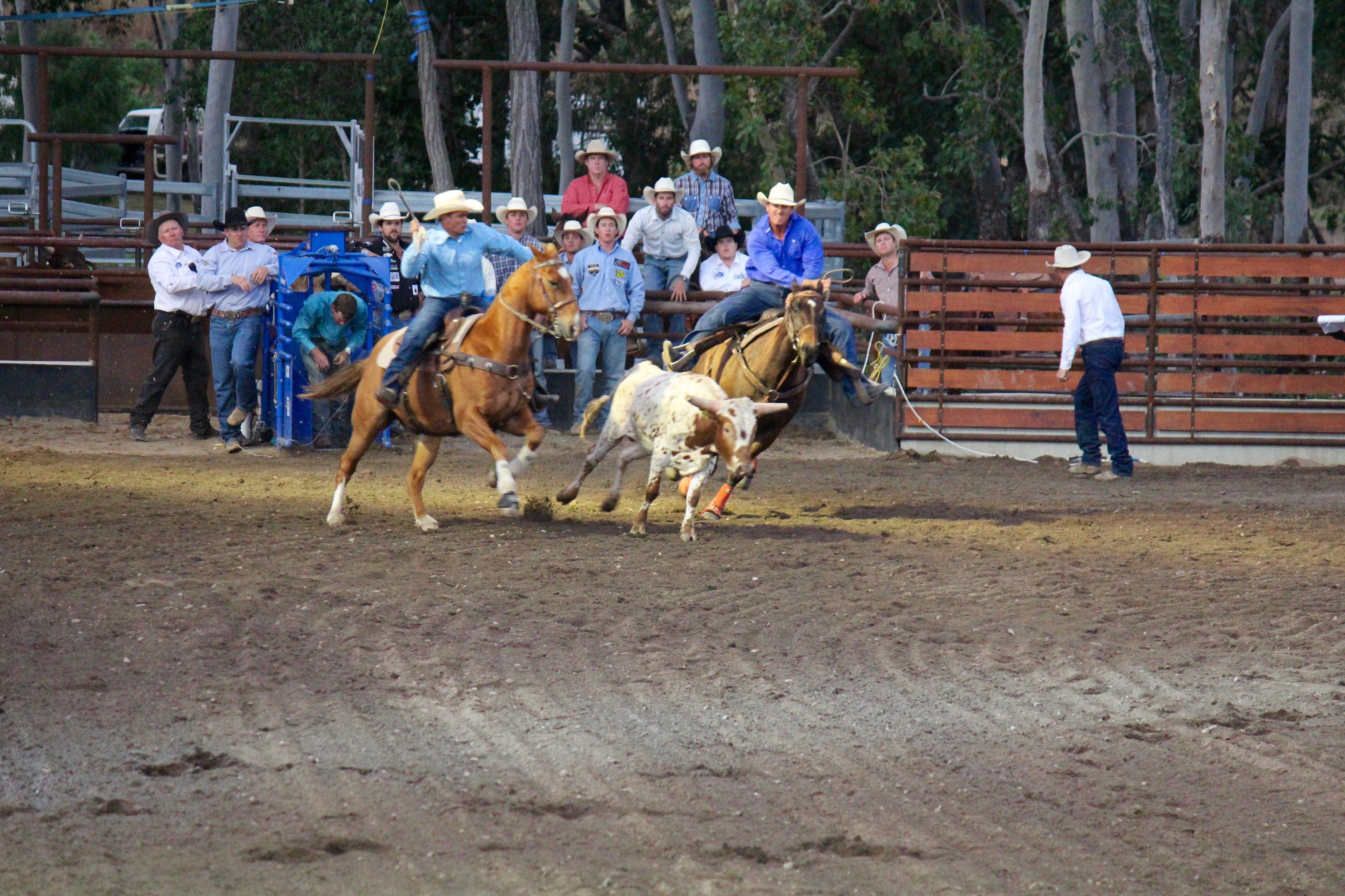 North Queensland Elite Rodeo - Tweed Heads Accommodation