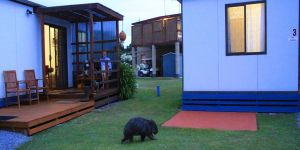 BIG4 Kelso Sands Holiday  Native Wildlife Park - Tweed Heads Accommodation
